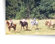 Horseback riding in the Vosges